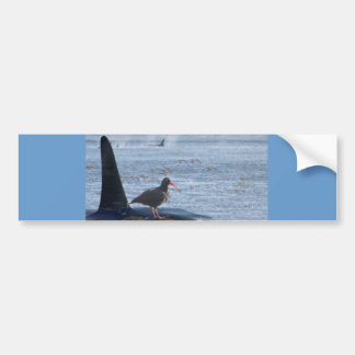 Orca Whale, Oyster Catcher Cascades Montage Car Bumper Sticker