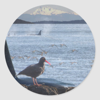 Orca Whale, Oyster Catcher Cascades Montage Classic Round Sticker