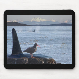 Orca Whale, Oyster Catcher Cascades Montage Mouse Pad