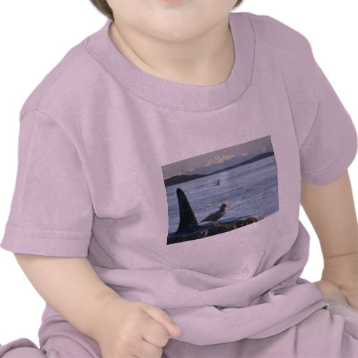 Orca Whale, Oyster Catcher Cascades Montage T-shirts