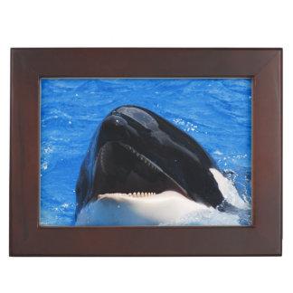 Orca Whale Memory Box