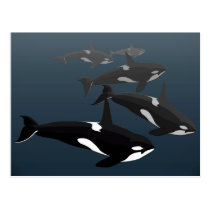 Orca Whale Postcards Custom Killer Whale Art Cards