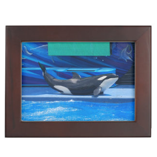 Orca Whale Showing Off Memory Box
