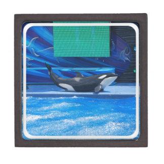 Orca Whale Showing Off Premium Keepsake Box