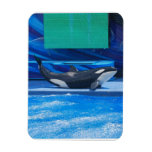Orca Whale Showing Off Rectangle Magnets