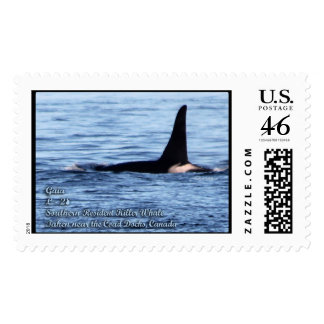 Orca Whale: Southern Resident Killer Whale Postage
