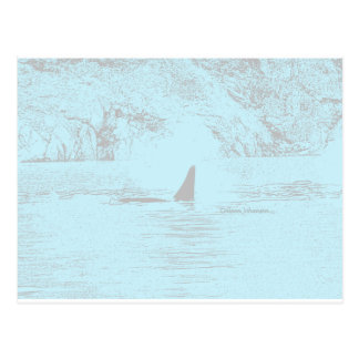 Orca Whale Swimming Drawing Turquoise Lavender Postcard