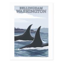 Orca Whales #1 - Bellingham, Washington Postcard