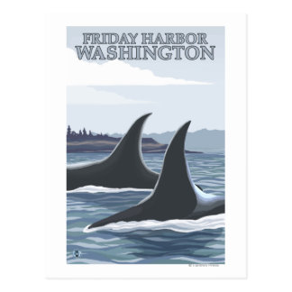 Orca Whales 1 - Friday Harbor Washington Postcard