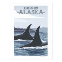 Orca Whales #1 - Haines, Alaska Postcard