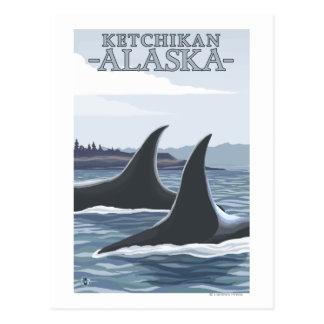 Orca Whales #1 - Ketchikan, Alaska Postcard