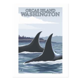 Orca Whales #1 - Orcas Island, Washington Postcard