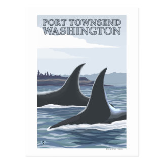 Orca Whales #1 - Port Townsend, Washington Postcard