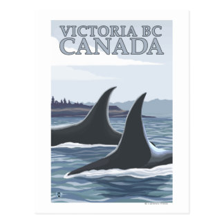 Orca Whales #1 - Victoria, BC Canada Post Card