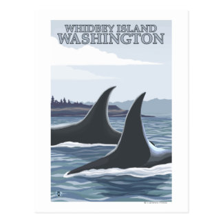 Orca Whales 1 - Whidbey Washington Post Card