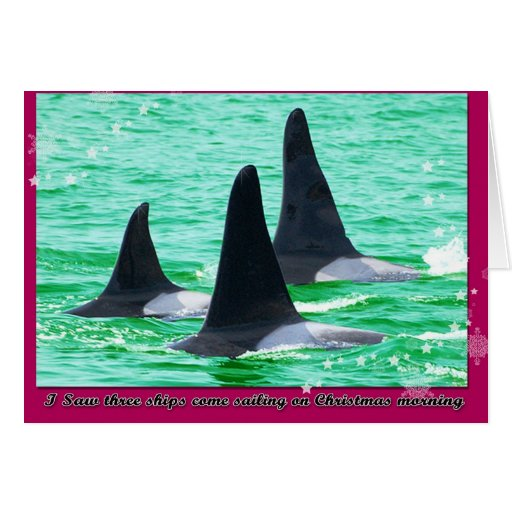 Orca Whales Come Sailing on Christmas Day Holiday Card