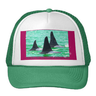 Orca Whales Come Sailing on Christmas Day Holiday Hat