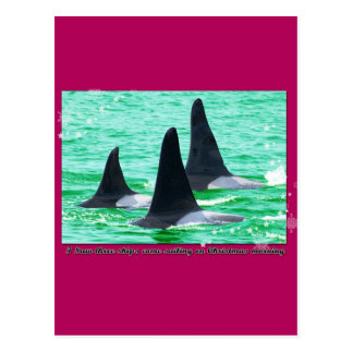 Orca Whales Come Sailing on Christmas Day Holiday Postcards