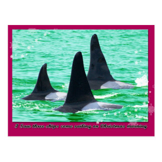 Orca Whales Come Sailing on Christmas Day Holiday Post Card