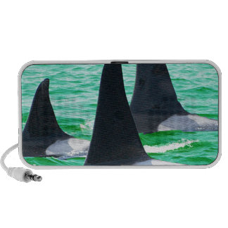 Orca Whales Come Sailing on Christmas Day Holiday Mp3 Speaker
