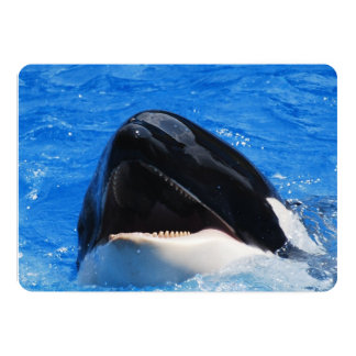 Orca Whales Personalized Announcement
