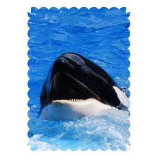 Orca Whales Announcements