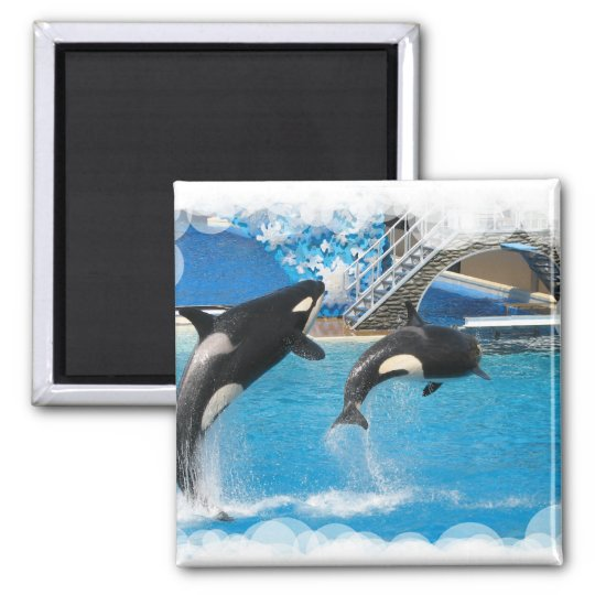 Orca Whales Magnet