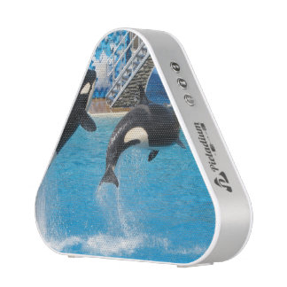 Orca Whales Speaker