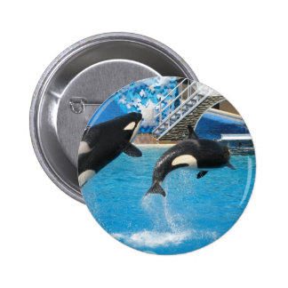 Orca Whales Pin