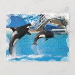 Orca Whales Postcard