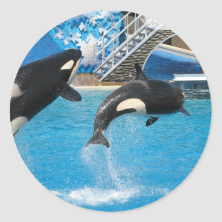 Orca Whales Sticker