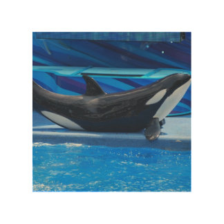 Orca Whales Wood Canvas