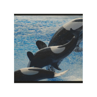 Orca Whales Wood Canvases