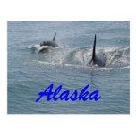 Orca y becerro, Alaska Postales