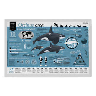 Orcagraphic poster - Nederlandse editie