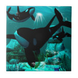 Orcas Azulejos