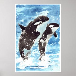 Orcas del Watercolour Póster