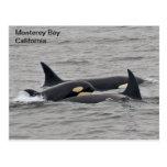Orcas en la postal de la bahía de Monterey