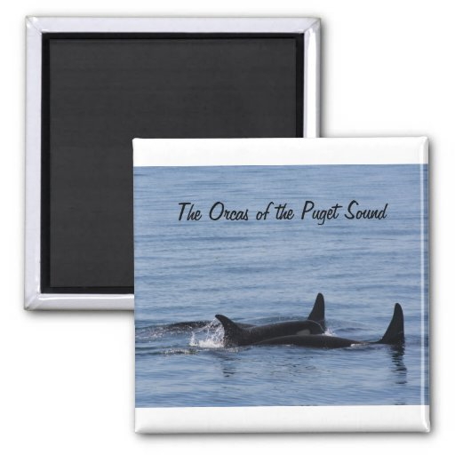 Orcas of the Puget Sound 2 Inch Square Magnet