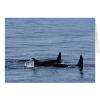 Orcas of the Puget Sound Card