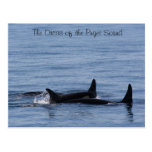 Orcas of the Puget Sound Post Card