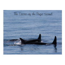 Orcas of the Puget Sound Postcard