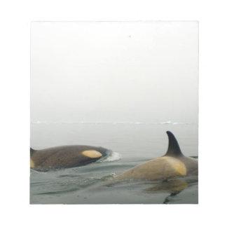 orcas (orcas), orca del Orcinus, vaina 2 Bloc De Notas