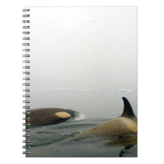 orcas (orcas), orca del Orcinus, vaina 2 Libreta Espiral