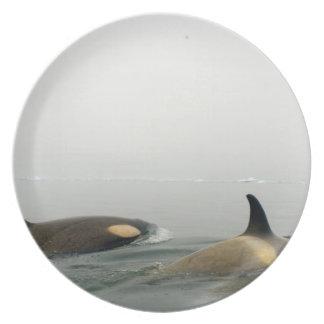 orcas (orcas), orca del Orcinus, vaina 2 Plato Para Fiesta