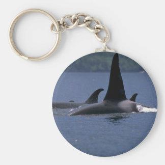 Orcas que nadan en la superficie llavero redondo tipo pin