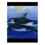 Orcas que nadan postal