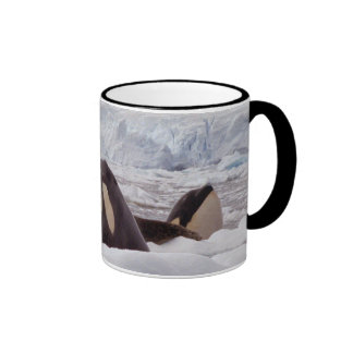 Orcas Spyhopping Mug