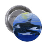 Orcas swimming pinback button