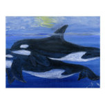 Orcas swimming post cards